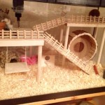 russian dwarf hamster bedding