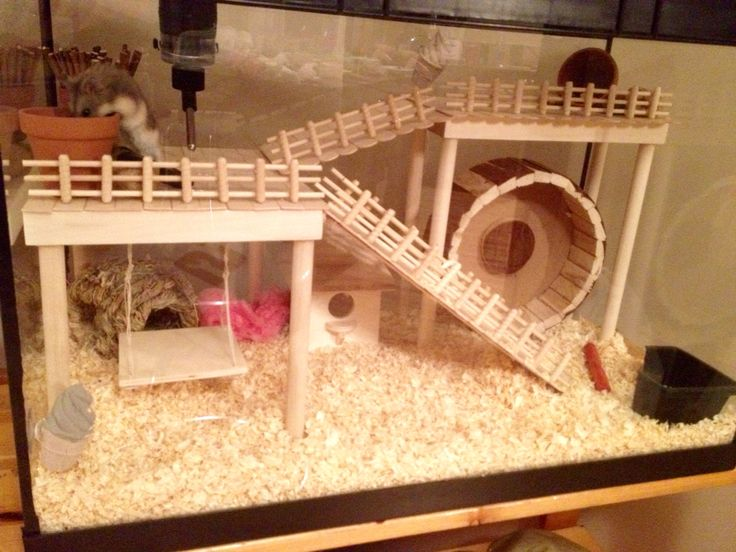Top 10 cages for hamster hamsters portal for Fish tank for hamster