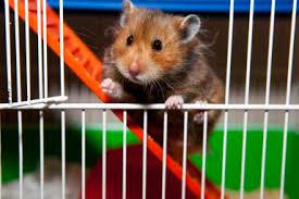syrian hamstercage