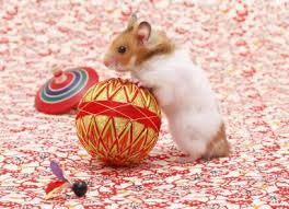 syrian hamsters playing