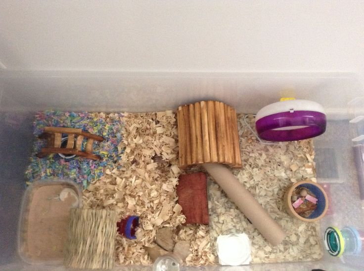 chinese hamstercages pets at home