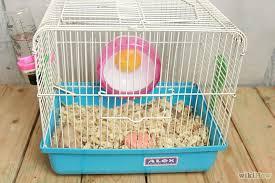 chinese hamsterat pets at home