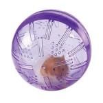 roborovski hamster exercise