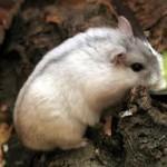 winter white dwarf hamster habitat