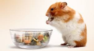 can hamsters eat peanut butter crackers