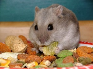 should hamsters eat almonds