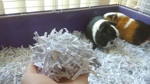 hamsters newspaper bedding