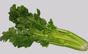 can hamsters eat celery leaves